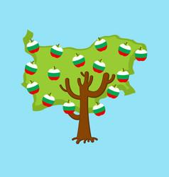patriotic apple tree bulgaria map apples vector image