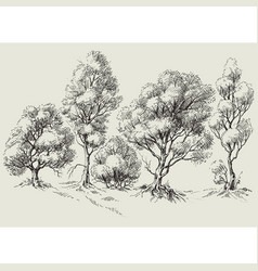 graphic trees line or border vector image vector image