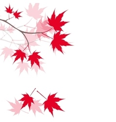 Red maple leaves on the branches Japanese red vector image vector image