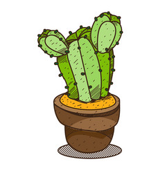 cactus in a pot colored plants logo on a white vector image