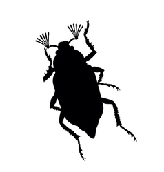 maybug vector image