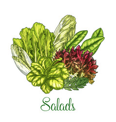 salads and leafy vegetables poster vector image
