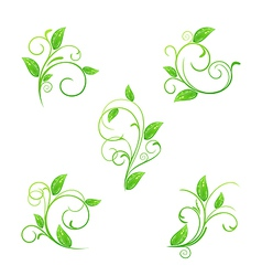 Set green floral elements with eco leaves isolated vector image