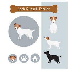 Jack russell dog breed infographic vector