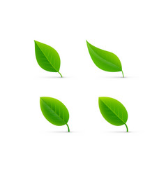 Leaf isolated vector