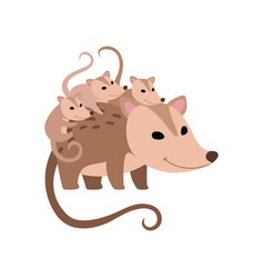 mother opossum with its babies family opossums vector image