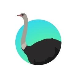 Ostrich flat design vector