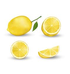 Realistic set lemon elements fresh yellow vector