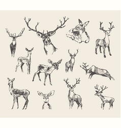 Set drawn noble deers sketch vector