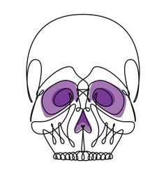 continuous line skull icon vector image