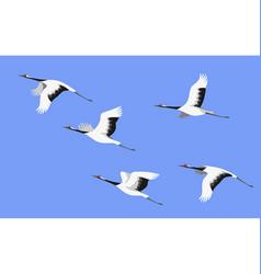 Flying japanese stork flock vector