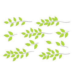 Green tree branches set vector
