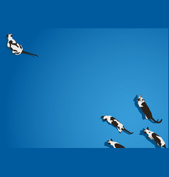 Siamese cat walking on blue background vector