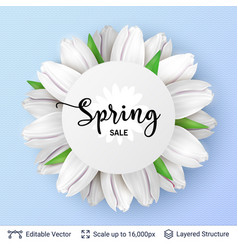 spring season white tulips and sale text vector image
