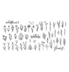 Wildflower line art set flower doodle botanical vector