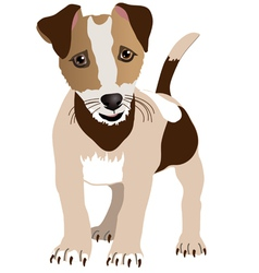 Jack Russell Terrier Puppy vector image vector image