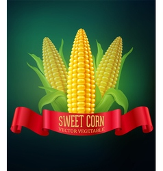 Background with cobs of corn and red ribbon vector