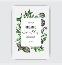 Banner for eco shop colorful herbs card vector