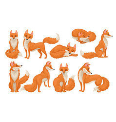 Flat set of bright red fox in different vector