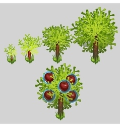 Growth stages of Apple tree with red fruit vector