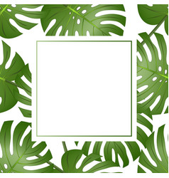 Philodendron monstera leaf banner card vector