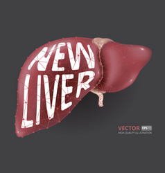 realistic new human liver consisting of vector image