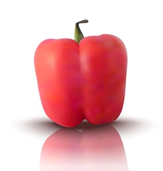 Red bell pepper vector