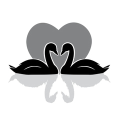swans black vector image