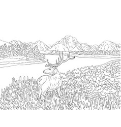Adult coloring bookpage a nature landscape with a vector