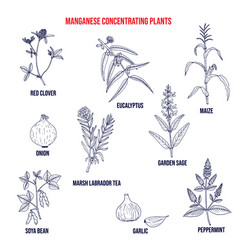 Collection medicinal plants concentrating vector