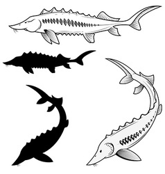 Set of sturgeon vector image