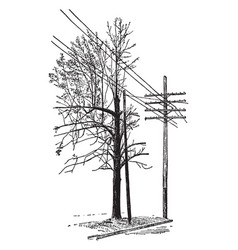 Tree trimmed by linemen vintage vector