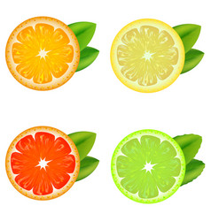 realistic detailed citrus set vector image