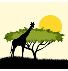 Acacia tree and giraffe silhouette concept design vector image