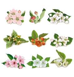 Set of flowers on fruit trees vector