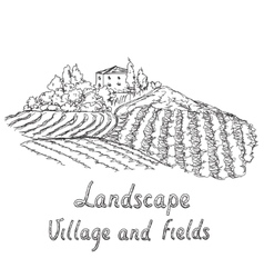 a vineyard Field and village vector image