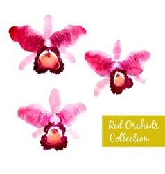 Collection of red watercolor orchids vector image