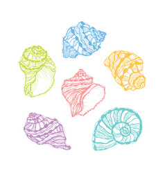 Colorful seashell set hand drawn vector