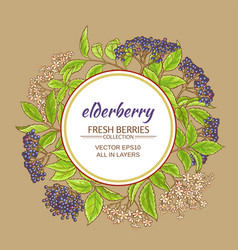 elderberry frame vector image