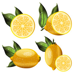 fresh lemon fruits collection vector image