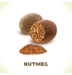 Nutmeg nut isolated on white vector image