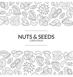 nuts and seeds banner template natural tasty and vector image