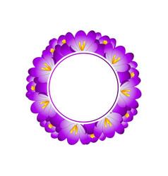 Purple crocus flower banner wreath vector
