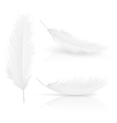 realisitc 3d white bird angel feathers set vector image