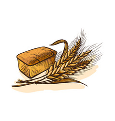 Watercolor bread and wheat vector