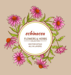 echinacea frame vector image vector image