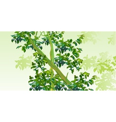 background with trees with green leaves vector image