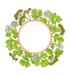 coriander frame vector image