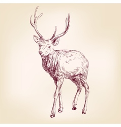 Deer hand drawn llustration realistic sketch vector image