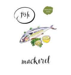 Fresh mackerel fish with lemon and salad vector